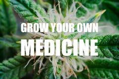 De macrobloem van mooie bladeren en de schouderriemen van jongelui, kweken uw eigen geneeskundetekst, kweken uw eigen geneeskunde Royalty-vrije Stock Fotografie