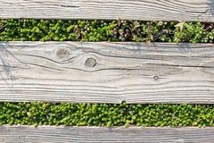 De madeira com grama verde Foto de Stock