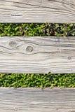 De madeira com vertical do fundo da grama verde Imagem de Stock Royalty Free