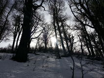 De madeira completamente da neve Foto de Stock Royalty Free