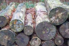 De madeira entra mais forrest Fotos de Stock Royalty Free