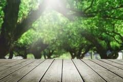 De madeira esvazie e borre o fundo da floresta Fotos de Stock Royalty Free