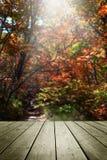 De madeira esvazie e borre o fundo do outono Fotos de Stock