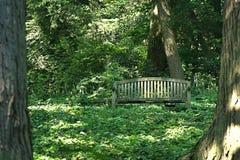De madeira nas madeiras Imagens de Stock Royalty Free