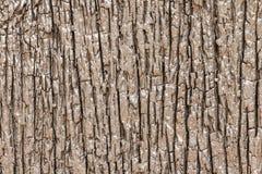 De madeira para o blackground bonito do teste padrão Foto de Stock Royalty Free