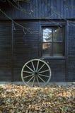 De madeira velhos rodam dentro o outono Foto de Stock