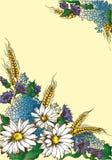 De madeliefjes van de illustratiekaart, oren van tarwe, hydrangea hortensia royalty-vrije illustratie