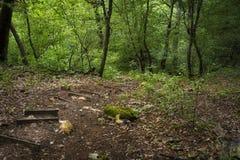 De madera abajo en el bosque de Strandja en el nationa de Strandja Imágenes de archivo libres de regalías