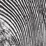 33 de madera apenados Foto de archivo libre de regalías