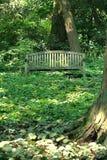 De madera en las maderas Foto de archivo libre de regalías