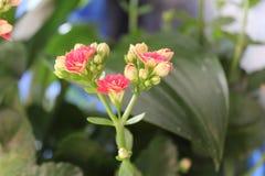 De magische bloem Stock Foto