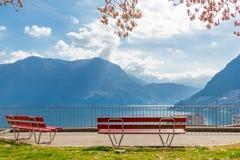 De Magnolia vertakt zich en de twee lege rode banken bij de heuvel in Lugano royalty-vrije stock fotografie