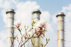 De magnoliabloemen groeien in Stedelijke Stadsverontreiniging Royalty-vrije Stock Foto's