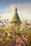 De magnoliaboom vertakt zich in bloei met de Metropolitaanse Kathedraal op de achtergrond in Timisoara stock foto