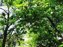 De magnoliatuin, de botanische tuin en de roze magnolia's komen tot bloei royalty-vrije stock afbeelding