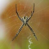 De Maker van het Web