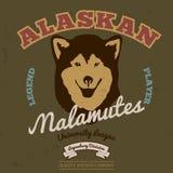 De malamuteclub van Alaska Grafisch T-stuk Vector Stock Foto's