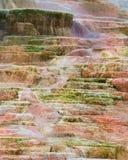 De mammoet hete lentes Stock Afbeeldingen