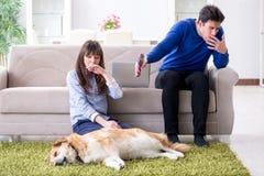 De man die allergie van hondenbont hebben royalty-vrije stock afbeeldingen