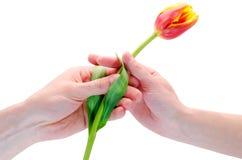De man geeft een bloem Stock Foto