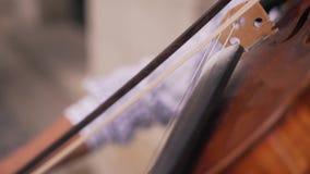 De man speelt de viool stock video