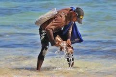 De man wast de verkopersshells prooi op het strand in Punta Cana, Dominicaanse Republiek Royalty-vrije Stock Foto