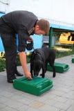 De managers van de hond worden opgeleid bij de douanehonden om drugs en wapens te zoeken Stock Afbeelding