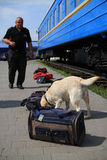 De managers van de hond worden opgeleid bij de douanehonden om drugs en wapens te zoeken Royalty-vrije Stock Foto's