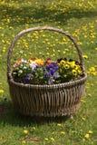 De mand van de tuin Stock Fotografie