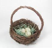 De Mand van het Nest van de vogel Stock Foto's