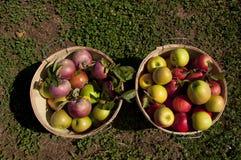De manden van de appel Royalty-vrije Stock Afbeelding
