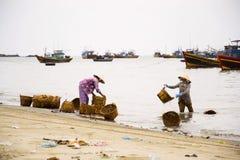De manden van de vrouwenwas voor ansjovissen voor vissensaus worden gebruikt op 7 Februari, 2012 in Mui Ne, Vietnam dat Stock Foto