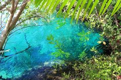 De mangrove turkoois water Mayan Riviera van Cenote Stock Fotografie