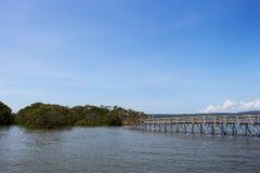 De Mangrove van Indonesië Royalty-vrije Stock Foto's