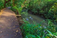 De mangrovebomen in een turf zetten bos en een rivier met duidelijk water bij Krabi-provincie, Thailand onder water stock foto's
