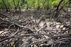 De Mangroven stock afbeelding