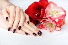 De manicure van het kuuroord met rode en witte bloemenclose-up Stock Foto's