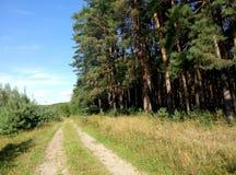 De manier aan de boswereld, een wereld waar alle gedachten helemaal opnieuw komen Stock Foto's
