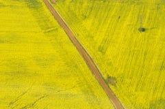 De manier in geel Stock Foto's
