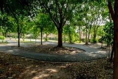 De manier om in het park te lopen Royalty-vrije Stock Fotografie