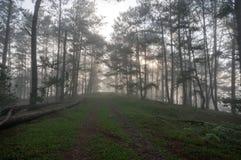 De manier in pijnboom bos, mistig royalty-vrije stock afbeeldingen