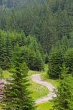 De manier van de bergweg werpt sparbos in Roemeense Carpatians Stock Fotografie