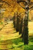De Manier van de herfst Royalty-vrije Stock Afbeeldingen