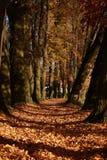 De manier van de herfst door het meer Stock Foto