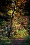 De manier van de kleur in hout Stock Foto