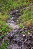 De manier van de steen Encontro das Aguas in Chapada-Dos Veadeiros Stock Fotografie