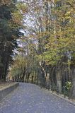 De manier van de de herfstberg stock afbeeldingen