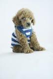 De manier van het puppy royalty-vrije stock foto