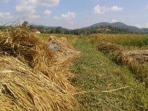 De manier van landbouwer Stock Foto