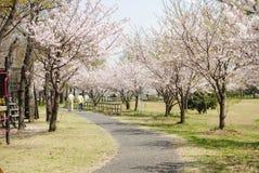 De manier van Sakura Stock Foto